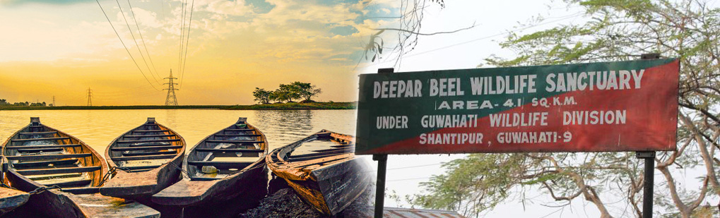 Dipor Beel Tour Operator Travel Agent, Dipor Beel National Park, Dipor Beel Tour Operator, Dipor Beel Travel Agent, Travel Agent Kaziranga, Dipor Beel Packaged Tour, Tour Package Dipor Beel, Itenary Dipor Beel, Dipor Beel Itenary, Rhino Dipor Beel, Visit to Dipor Beel, Tourist Spot Dipor Beel, Tourist Destination Dipor Beel, Trip to Dipor Beel, Adventure Trip to Dipor Beel, Leisure trip to Dipor Beel, Birding Dipor Beel, Trekking to Bhaklukpong, Tribal Tour Dipor Beel, Heritage Tour Dipor Beel, Deepor Beel Tour Operator Travel Agent, Deepor Beel National Park, Deepor Beel Tour Operator, Deepor Beel Travel Agent, Travel Agent Kaziranga, Deepor Beel Packaged Tour, Tour Package Deepor Beel, Itenary Deepor Beel, Deepor Beel Itenary, Rhino Deepor Beel, Visit to Deepor Beel, Tourist Spot Deepor Beel, Tourist Destination Deepor Beel, Trip to Deepor Beel, Adventure Trip to Deepor Beel, Leisure trip to Deepor Beel, Birding Deepor Beel, Trekking to Bhaklukpong, Tribal Tour Deepor Beel, Heritage Tour Deepor Beel, Deepor Beel Bird Wildlife Sanctuary Tour Operator Travel Agent, Deepor Beel Bird Wildlife Sanctuary National Park, Deepor Beel Bird Wildlife Sanctuary Tour Operator, Deepor Beel Bird Wildlife Sanctuary Travel Agent, Travel Agent Kaziranga, Deepor Beel Bird Wildlife Sanctuary Packaged Tour, Tour Package Deepor Beel Bird Wildlife Sanctuary, Itenary Deepor Beel Bird Wildlife Sanctuary, Deepor Beel Bird Wildlife Sanctuary Itenary, Rhino Deepor Beel Bird Wildlife Sanctuary, Visit to Deepor Beel Bird Wildlife Sanctuary, Tourist Spot Deepor Beel Bird Wildlife Sanctuary, Tourist Destination Deepor Beel Bird Wildlife Sanctuary, Trip to Deepor Beel Bird Wildlife Sanctuary, Adventure Trip to Deepor Beel Bird Wildlife Sanctuary, Leisure trip to Deepor Beel Bird Wildlife Sanctuary, Birding Deepor Beel Bird Wildlife Sanctuary, Trekking to Bhaklukpong, Tribal Tour Deepor Beel Bird Wildlife Sanctuary, Heritage Tour Deepor Beel Bird Wildlife Sanctuary, Deepor Beel Guwahati Assam Tour Operator Travel Agent, Deepor Beel Guwahati Assam National Park, Deepor Beel Guwahati Assam Tour Operator, Deepor Beel Guwahati Assam Travel Agent, Travel Agent Kaziranga, Deepor Beel Guwahati Assam Packaged Tour, Tour Package Deepor Beel Guwahati Assam, Itenary Deepor Beel Guwahati Assam, Deepor Beel Guwahati Assam Itenary, Rhino Deepor Beel Guwahati Assam, Visit to Deepor Beel Guwahati Assam, Tourist Spot Deepor Beel Guwahati Assam, Tourist Destination Deepor Beel Guwahati Assam, Trip to Deepor Beel Guwahati Assam, Adventure Trip to Deepor Beel Guwahati Assam, Leisure trip to Deepor Beel Guwahati Assam, Birding Deepor Beel Guwahati Assam, Trekking to Bhaklukpong, Tribal Tour Deepor Beel Guwahati Assam, Heritage Tour Deepor Beel Guwahati Assam, Birding in Deepor Beel India, Bird Watching in Deepor Beel India, Birding Destionation in Deepor Beel India, National Park Birding, Bird Watcher in Deepor Beel India, Places for Bird Watching in Deepor Beel India, Birding Tour Package, Bird Watching Tour Package, Tour Operator for Birding in Deepor Beel , Travel Agent for Birding in Deepor Beel , Bird Watching Itenary, Itenary for Wildlife Birding Deepor Beel India, Package Tour for Birding in Deepor Beel India, Birding India Tours, Bird Watching Tour, Tourist Attraction Birding in Deepor Beel India, Tourist Destionation Bird Watching places in Deepor Beel India, Birding in Dipor Beel, Bird Watching in Dipor Beel, Birding Destionation in Dipor Beel, National Park Birding, Bird Watcher in Dipor Beel, Places for Bird Watching in Dipor Beel, Birding Tour Package, Bird Watching Tour Package, Tour Operator for Birding in Jhanjimukh Kakilamukh , Travel Agent for Birding in Jhanjimukh Kakilamukh , Bird Watching Itenary, Itenary for Wildlife Birding Dipor Beel, Package Tour for Birding in Dipor Beel, Birding India Tours, Bird Watching Tour, Tourist Attraction Birding in Dipor Beel, Tourist Destionation Bird Watching places in Dipor Beel